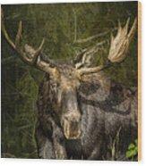 The Bull Moose Wood Print