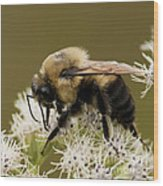 The Bumble Bee.. Wood Print