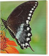 The Butterfly And The Zinnia Wood Print