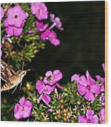 The Butterfly Garden At Night Wood Print