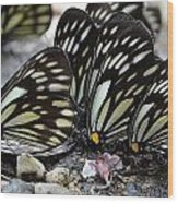The Butterfly Gathering Wood Print