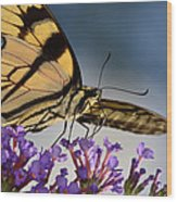 The Butterfly Wood Print by Lori Tambakis
