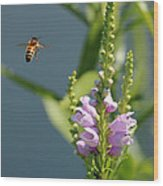 The Buzz Wood Print