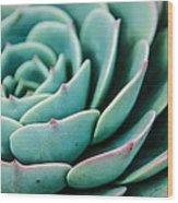 The Cactus Wood Print