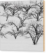 The Calligraphy Of Apple Trees In Winter Wood Print