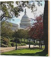 The Capitol Building  Wood Print