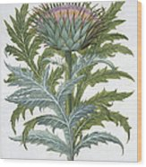 The Cardoon, From The Hortus Wood Print