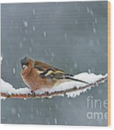 The Chaffinch Wood Print