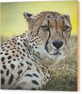The Cheetah In Grass Wood Print by Chad Davis