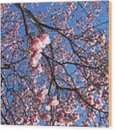 The Cherry Blossons Wood Print
