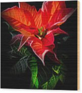 The Christmas Flower - Poinsettia Wood Print
