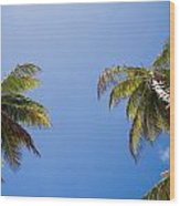 The Coconut Ladder Wood Print