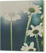 The Color Of Spring Wood Print