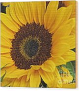 The Color Of Summer - Sunflower Wood Print