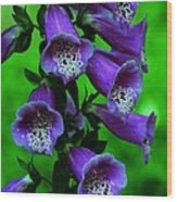 The Color Purple Wood Print by Kathleen Struckle