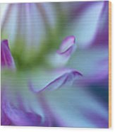 The Color Purple Wood Print by Kathy Yates
