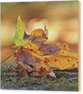 The Colors Of Fall Wood Print