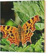 The Comma -- Polygonia C-album Wood Print
