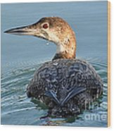 The  Common Loon Wood Print
