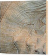 The Conch Wood Print