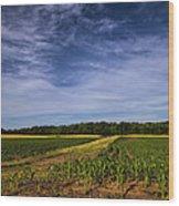 The Corn Fields Of Alabama Wood Print