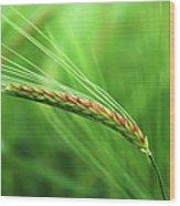 The Corn Wood Print