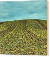 The Corn Rows Wood Print