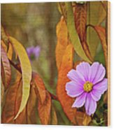 The Cosmos In The Peach Tree Wood Print by Theresa Tahara