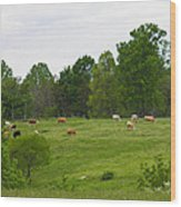 The Cows Of May Wood Print
