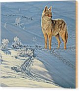 the Coyote - God's Dog Wood Print by Paul Krapf
