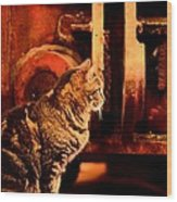 The Crane Yard Cat Wood Print