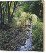 The Creek At Finch Arboretum 2 Wood Print