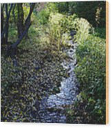 The Creek At Finch Arboretum Wood Print