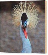 The Crowned Crane Wood Print