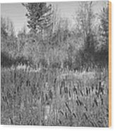 The Dance Of The Cattails Bw Wood Print
