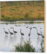 The Dance Of The Sandhill Cranes Wood Print