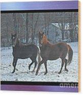 The Dancing Paso Fino Stallions Wood Print