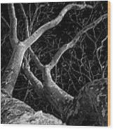 The Dark And The Tree 2 Wood Print