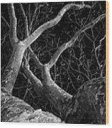 The Dark And The Tree 2 Wood Print by Fabio Giannini