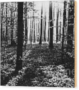 The Dark Forest Wood Print
