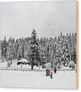 The Dazzle Of Winter Trees At Gulmarg - Kashmir- India- Viator's Agonism Wood Print