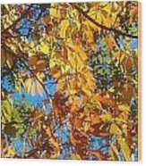 The Dazzling Colors Of Fall Wood Print