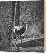 The Deer Wood Print