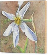 The Delicate Autumn Lady - Narcissus Serotinus Wood Print