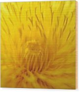 The Detail Is In The Dandelion Wood Print