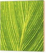The Detail Of Plant Leaf, Salt Lake Wood Print