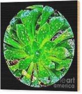The Dew No.12 Wood Print