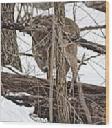 The Doe And The Snow - Odocoileus Virginianus Wood Print