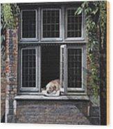 The Dog of Bruges Wood Print