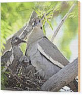 The Dove Family  Wood Print